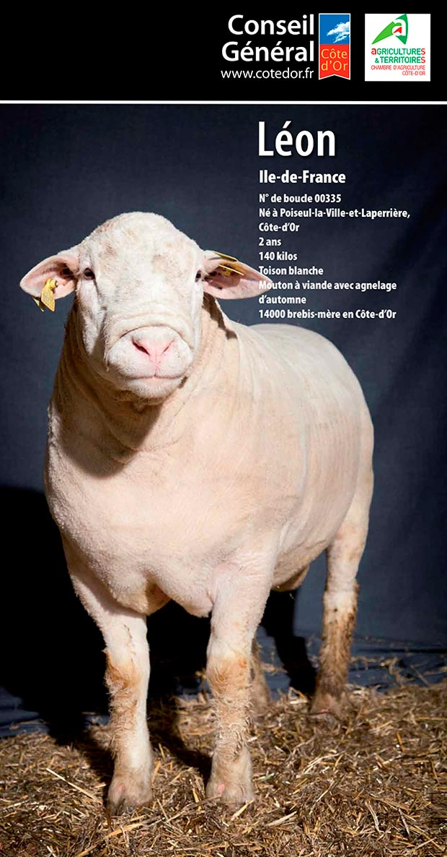 Julien Dromas photographe Dijon publicité corporate mouton Conseil Général 21